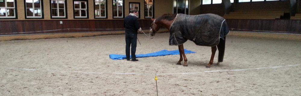 individuele coaching met paarden, teamtraining met paarden, paardencoaching, InnerQi