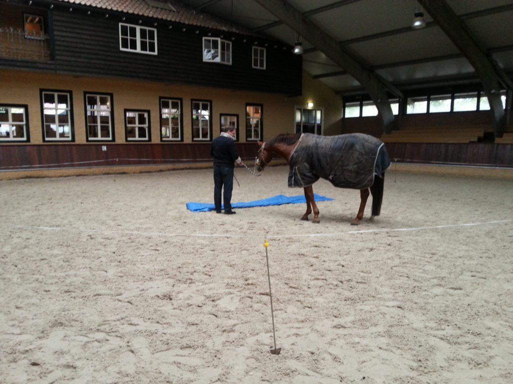 coaching met paarden, teamtraining met paarden, paardencoaching, InnerQi, leiderschapstraining