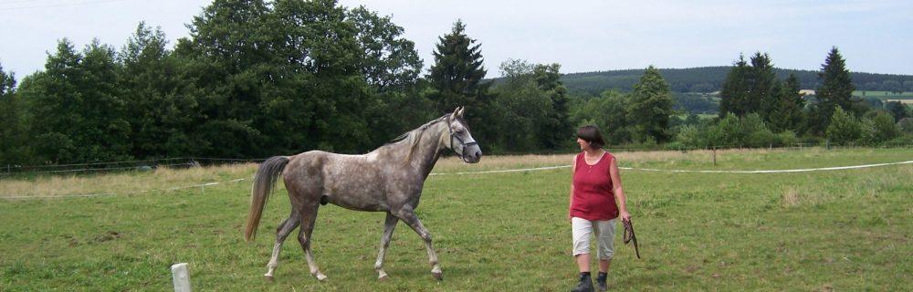 volgen en leiden, coachen met paarden, paardencoaching, InnerQi