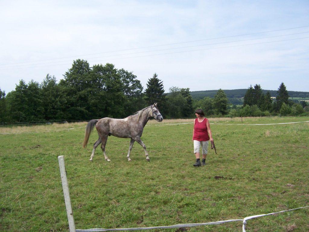 volgen en leiden, coachen met paarden, paardencoaching, InnerQi, persoonlijk leiderschap