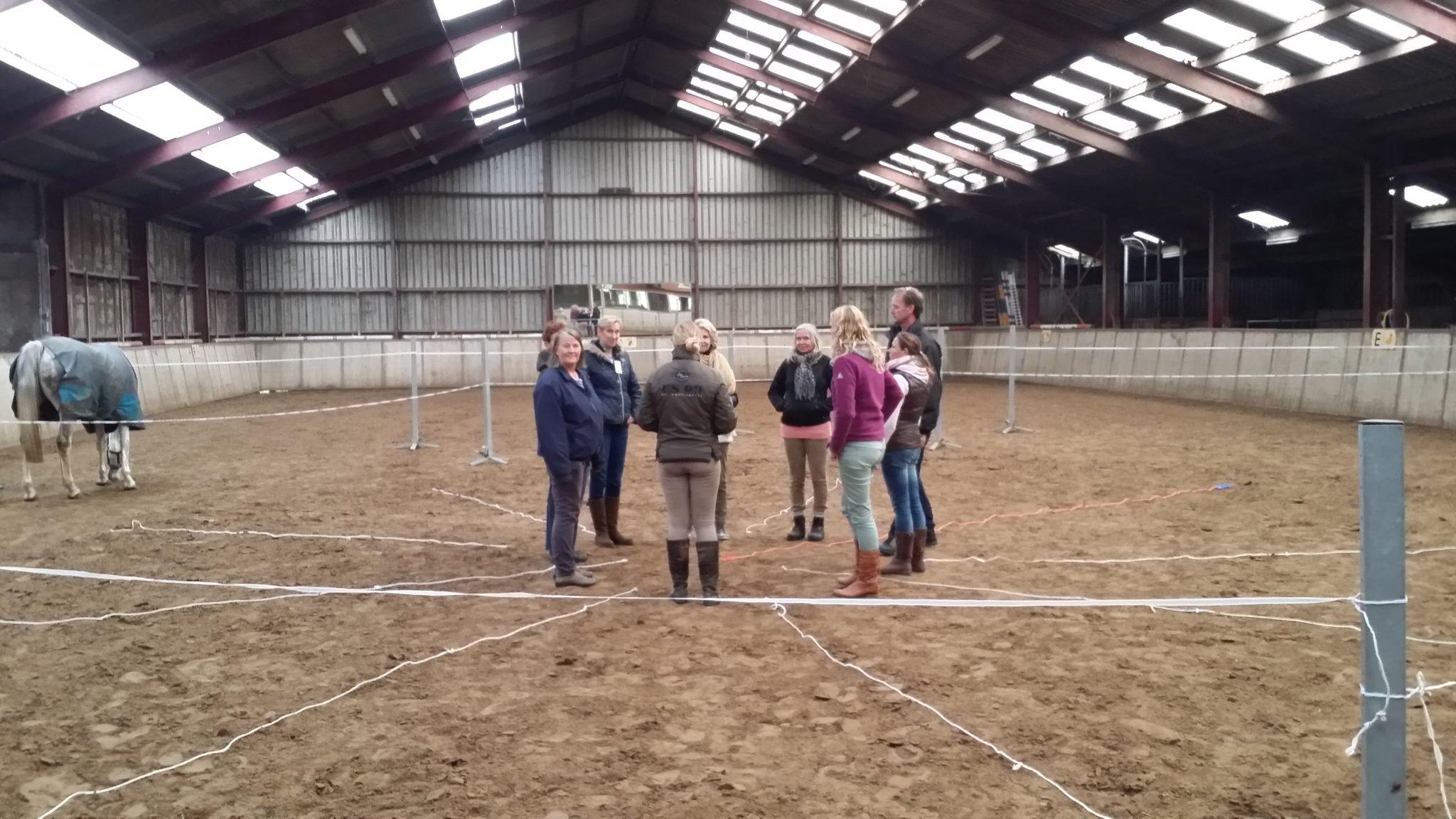 Teambuilding en teamontwikkeling, paardencoachin