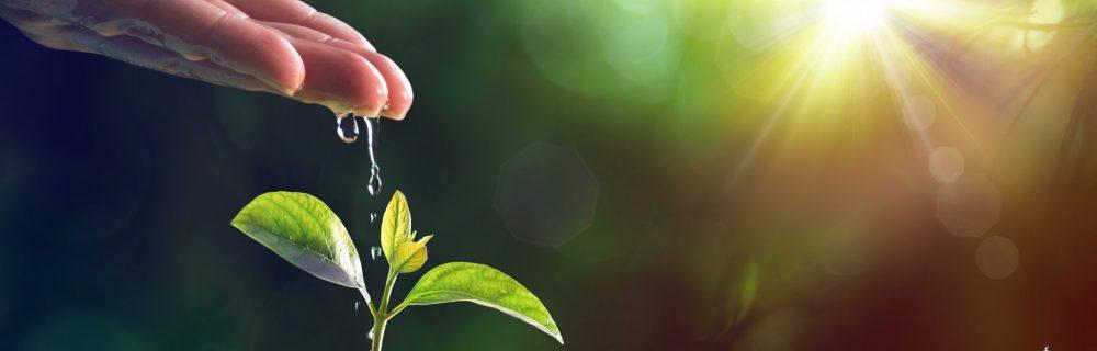 Persoonlijke groei bij InnerQi