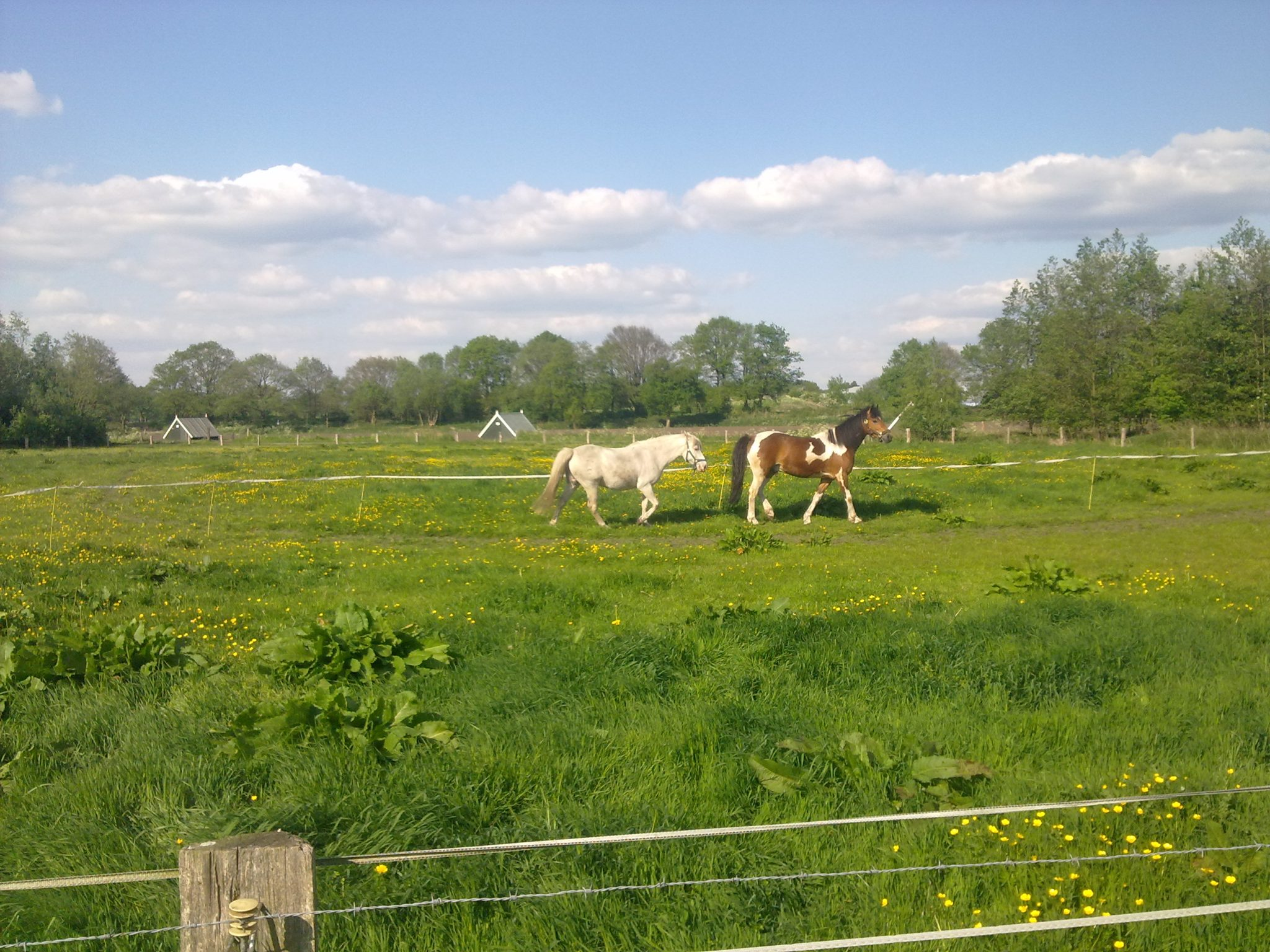 paardencoach opleiding, Innerqi