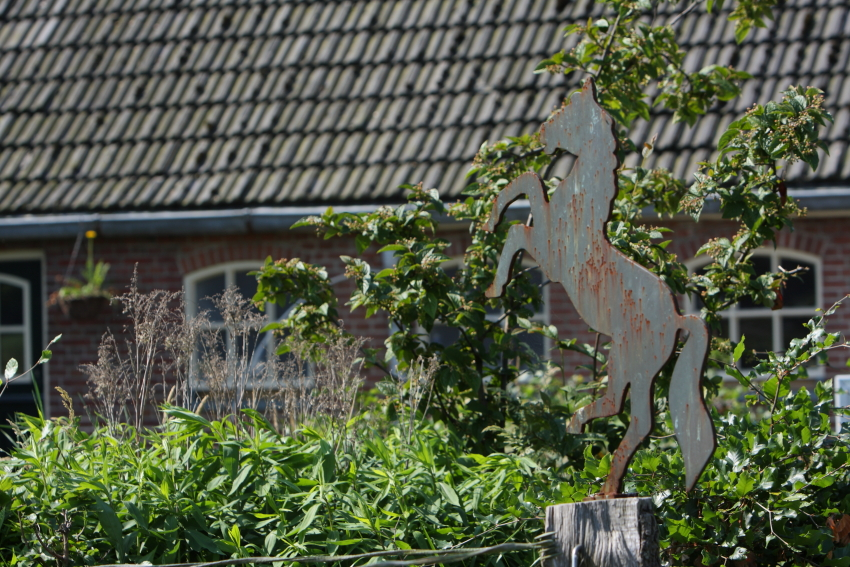 opleiding paardencoaching