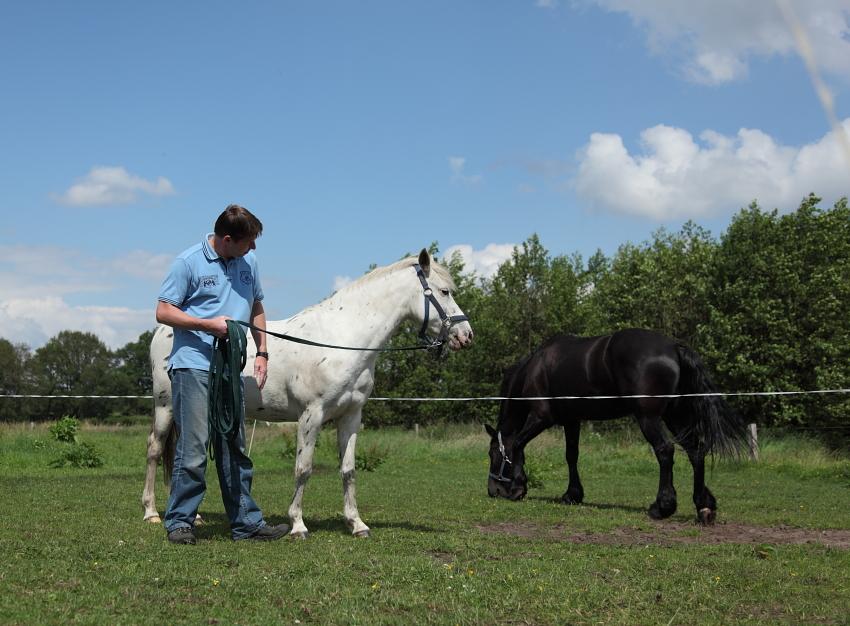 Spiegelen met paarden, InnerQi, Ferdinand Aukes