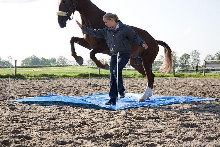 Spiegelen met paarden, InnerQi, Coachen met paarden, paardencoaching,