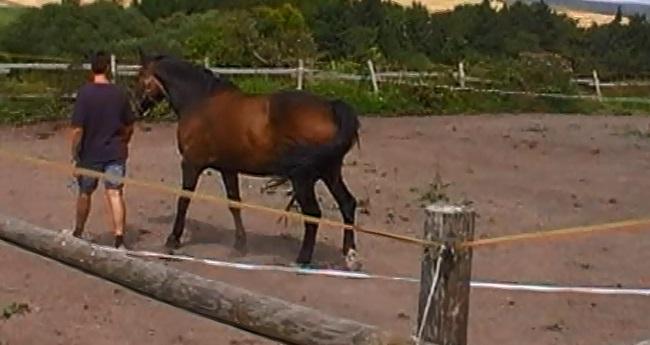 coaching met paard, paarden spiegelen