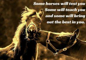 Paarden vertellen, paardencoachopleiding, Innerqi, Spiegelen met paarden